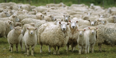 Religious People Are Like Sheep!
